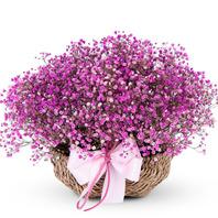 핑크안개꽃바구니(예약배송)